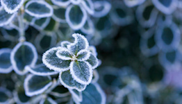 Does Covering Your Plants Before a Deep Freeze Really Help?