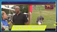 Barry Bonds with his dog at Westminster Dog Show — Ben Verlander shares his thoughts | Flippin' Bats