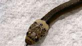 Cliente de supermercado halla serpiente en su lechuga