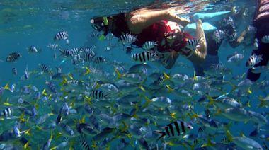 【獨家/旅遊泡泡】國門小開!去帛琉玩免14天檢疫 待阿中拍板、最快下周成行 | 蘋果新聞網 | 蘋果日報