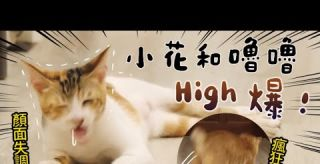 【黃阿瑪的後宮生活】小花和嚕嚕High爆!瘋狂跳躍!