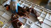 China is pushing a new Covid origin theory: Maine lobsters