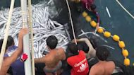 Three endangered whale sharks released after getting tangled in trawler's net in Thailand