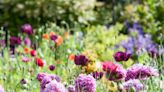 When Is It Too Late to Plant Spring-, Summer-, or Fall-Blooming Flower Types?