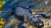 Everglades National Park and other places most in danger