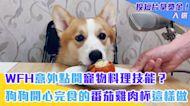 WFH意外點開寵物料理技能? 狗狗開心完食的番茄雞肉杯這樣做