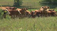 U.S. Agriculture Secretary Visits MN As State's Drought Worsens
