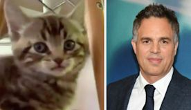 Mark Ruffalo Got A Pet Kitty, Named It Biscotti, And That's The Entire Post