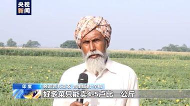 印度疫情致蔬菜運銷困難 菜農被迫賤賣棄菜-國際在線
