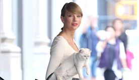 National Cat Day: See Taylor Swift & More Stars Cuddling Up To Their Sweet Kitties