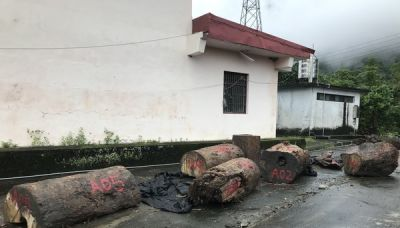 「盧碧」把牛樟木沖到荖濃溪河床 3嫌大卸9塊藏宮廟慘了