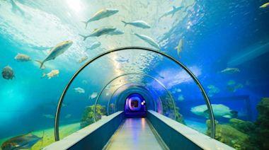 2021澎湖水族館全攻略 / 超美海底隧道 + 必看大洋池餵食秀 - SayDigi | 點子生活