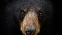 Bicyclist kicks attacking 500-pound brown bear as it mauls him, Alaska cops say