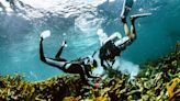 A Race Against Time to Rescue a Reef From Climate Change