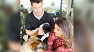 Priyanka Chopra & Nick Jonas Expand Family With Rescue Pup: 'We're Already In Love'
