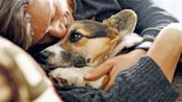 Should You Choose Pet Euthanasia at Home vs. the Vet Clinic?
