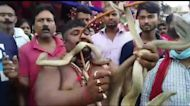 Religious Hindus take to streets for festival while holding hundreds of deadly cobras