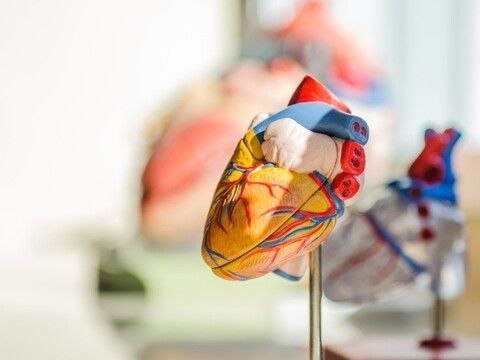 6種好營養素 天然的心血管清道夫