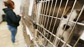 Overcrowding, financial crunch imperils animal shelter future