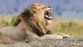 Stock Market Today: Nasdaq Hits New High as FAANGs Bare Teeth