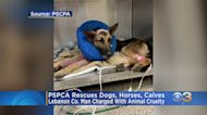Pennsylvania SPCA Rescues Several Animals From Lebanon County Property