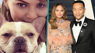 Chrissy Teigen & John Legend's Beloved Dog Pippa Died In Her Arms: 'We Love You Sweet Girl'