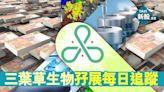 【新股IPO】三葉草生物2197首日孖展 暫錄7518萬、未足額認購(不斷更新) - 香港經濟日報 - 即時新聞頻道 - 即市財經 - 股市