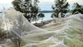 'Spider apocalypse' hits Australia as clouds of cobwebs blanket landscape
