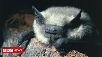 Protecting hedges boosts bat numbers
