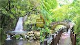 新竹尖石絕對秘境!全新五星級老鷹溪步道,20分鐘賞山澗飛瀑,森林有約中~