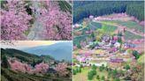 宮崎駿級「粉紅小鎮」在新竹!藏在深山的「祕境櫻花季」開跑,雲海+日出超美