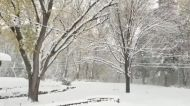 Winter Storm Blankets Minneapolis Region in Nearly 8 Inches of Snow