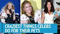 Chrissy Teigen and John Legend Get New Puppy After Dog Pippa's Death