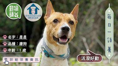 香港領養動物|1歲唐狗是是曾遭主人棄養 你願意重新給牠一個家嗎? | 蘋果日報