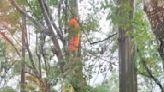 風雨英雄曝!烟花襲北台山區904戶停電 這一幕讓人感謝