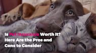 Is Pet Insurance Worth It? Here Are the Pros and Cons to Consider