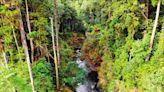 「水漾森林」風險評估 嘉義林管處:下游安全無虞