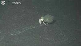 Underwater video shows ash covering La Palma sea life