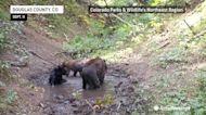 Family of bears enjoys a playful bath