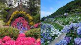 連假、母親節賞花趣!全台5大超美繡球花景點推薦
