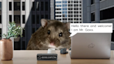 Crypto-trading hamster Mr. Goxx has outperformed the S&P 500 since June