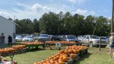 Helena Hollow leads into a successful fall season - Shelby County Reporter