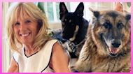 First Lady Jill Biden On Dogs Acclimating To The White House | Extended Cut