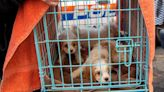 Riverhead mulls ban on sales of commercially bred pets