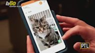 CGI Tech Center: App To Translate Your Cat