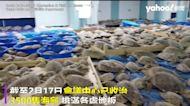 德州變「冰箱」大停電無法供暖 3500隻凍僵海龜急救援排滿收容所