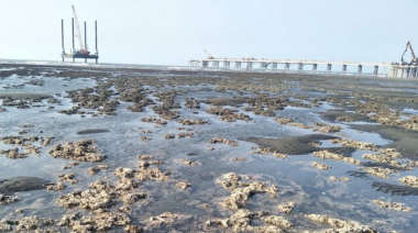 藻礁爆紅蔡政府才急喊溝通 學者諷:局面回不去了