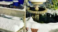 Snowstorm Shutters 'Nonessential Services' in Albuquerque