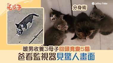 流浪貓一家三口闖車庫求包養 爸回頭竟變5貓 監視器見驚人畫面