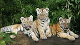 5 Stocks These Tech-Focused Tiger Cubs Both Own